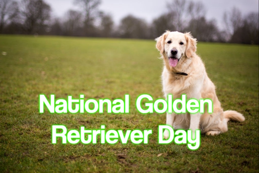 National Golden Retriever Day