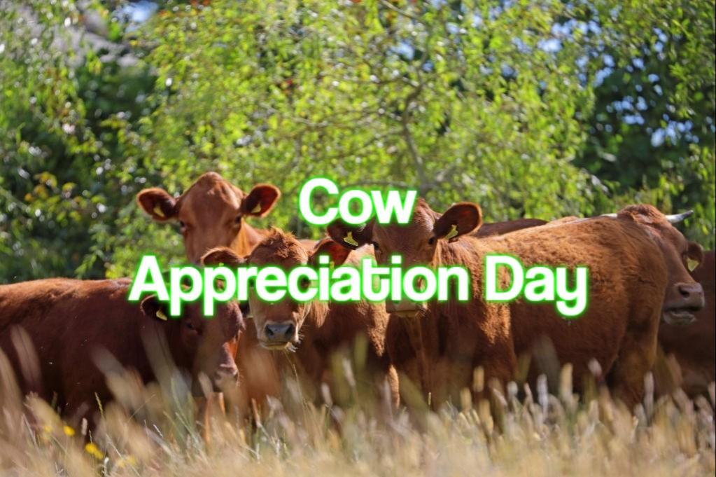 Cow Appreciation Day